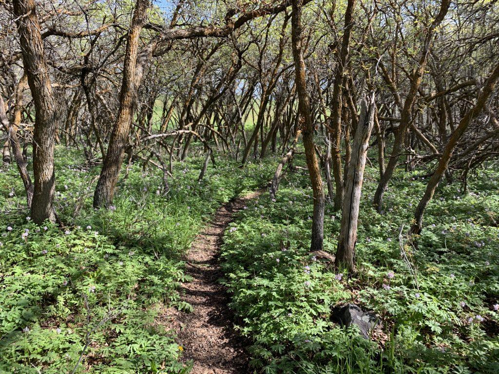 SunCrest-Maple Hollow Meadow